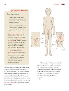 Caracteres sexuale primarios y secundarios en el hombre
